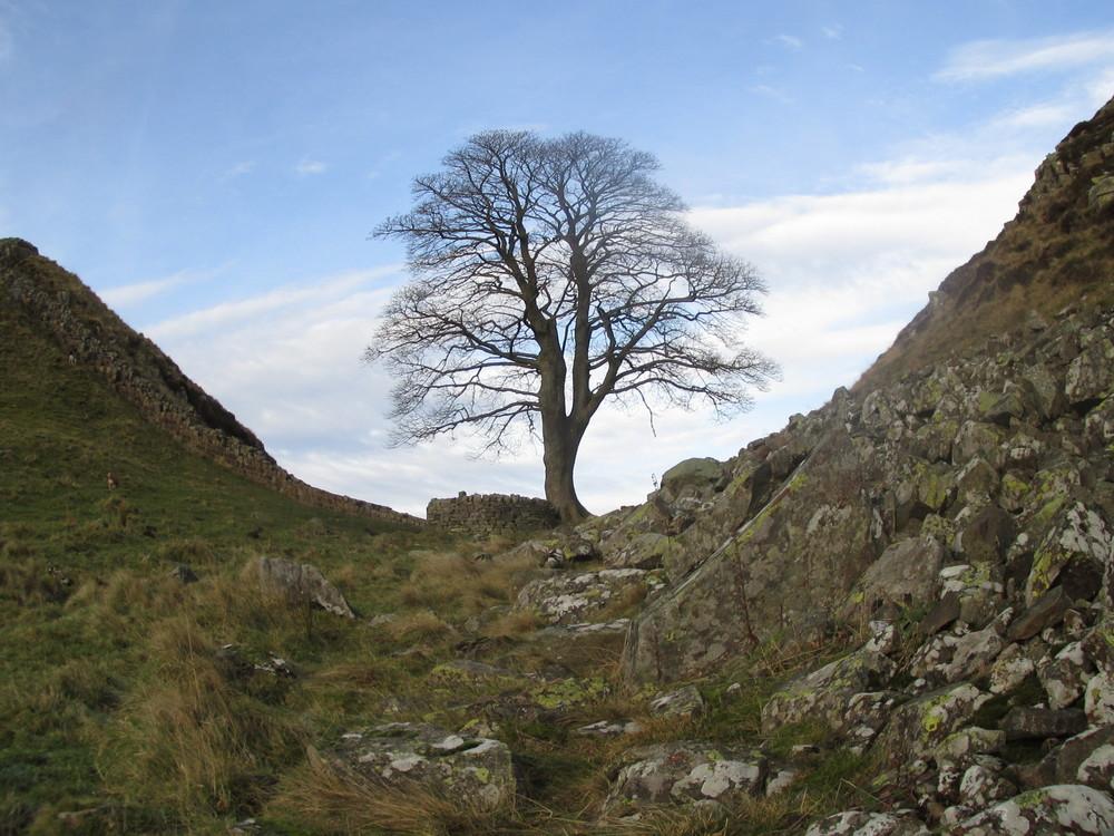 Tree on Hadrian's Wall