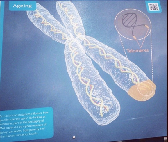 Biological Ageing - How our bodies actually age. Currently working on developing new way of measuring biological age with colleagues at the University of Stirling.