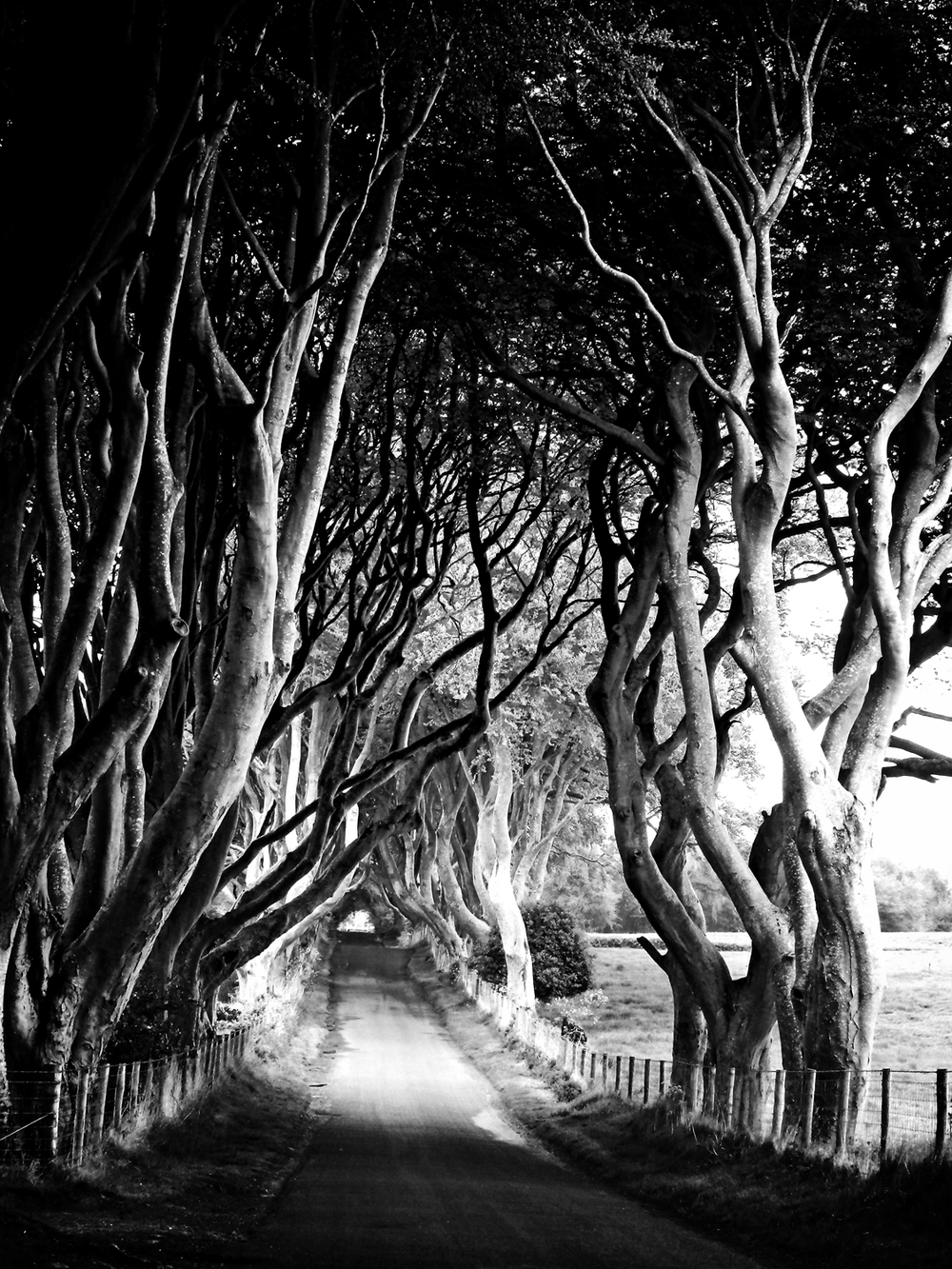 Dark Hedges. web_edited-2.jpg