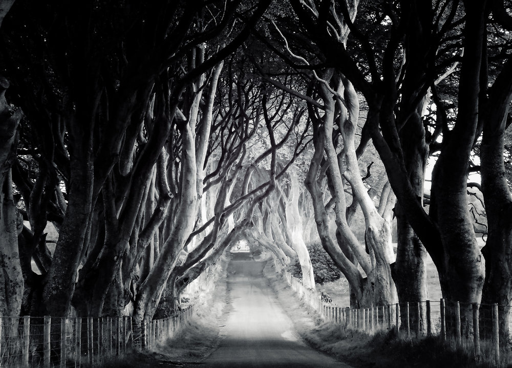 dark hedges bw printer web.jpg