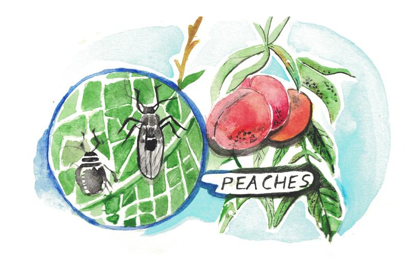 peacheseloisegrills1.jpg