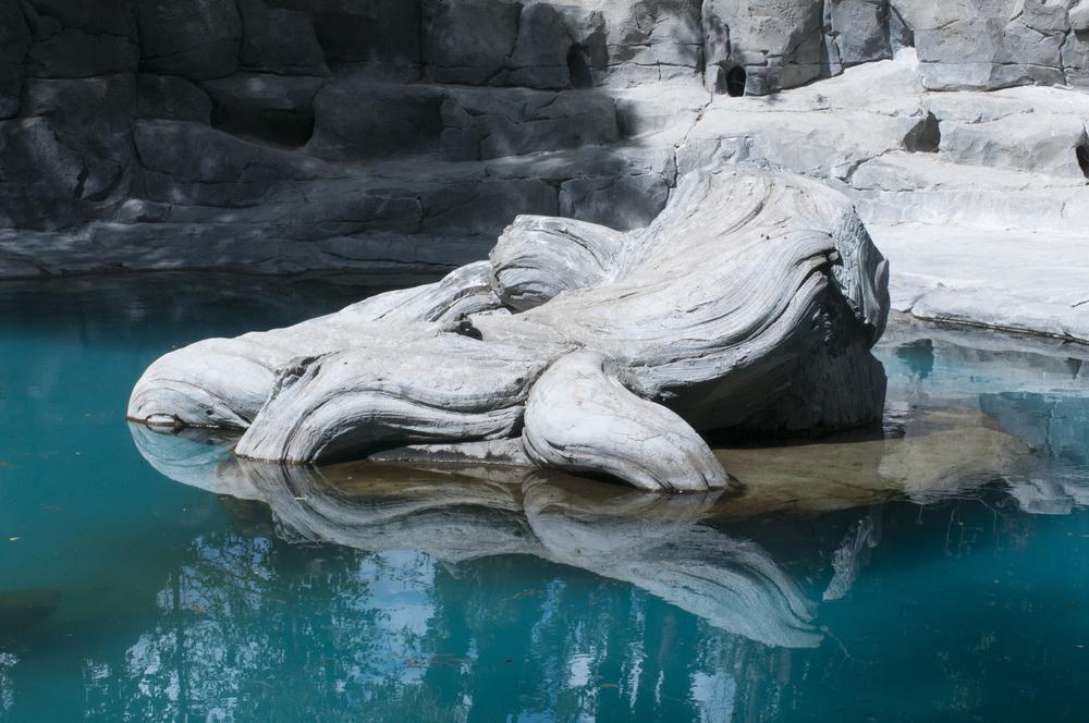 it-zoological-steen.jpg