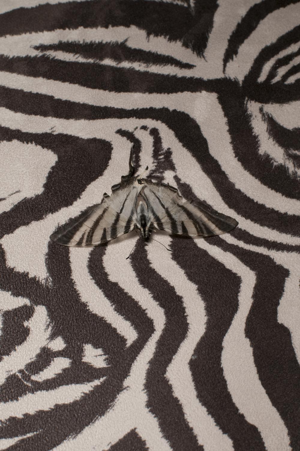 vlinderstoel-website.jpg