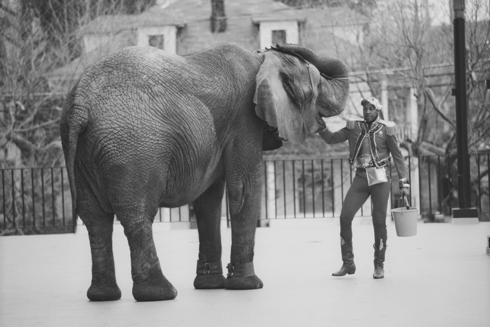 <h3>Tyke Elephant Outlaw</h3>