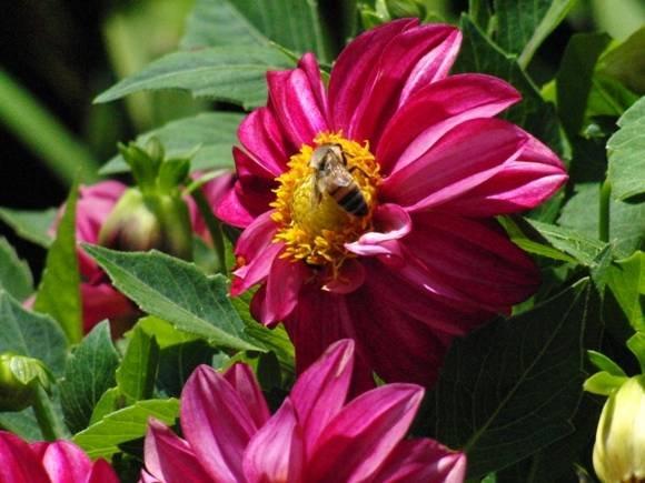 Bee1_580_435_85.JPG