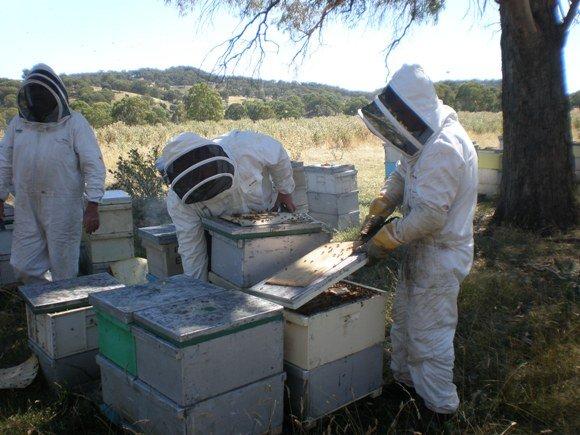 Bee2_580_435_85.JPG