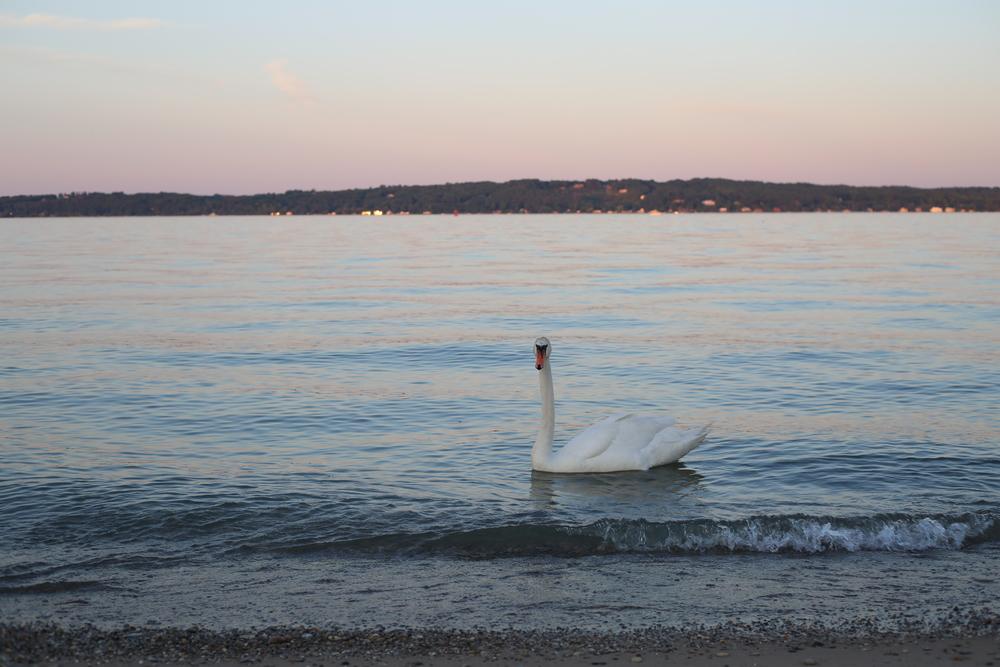 Swan Bay