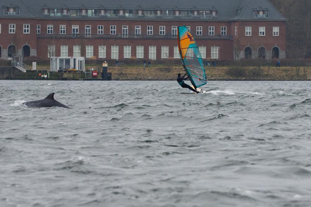 Surfen mit Delfinen Flensburg