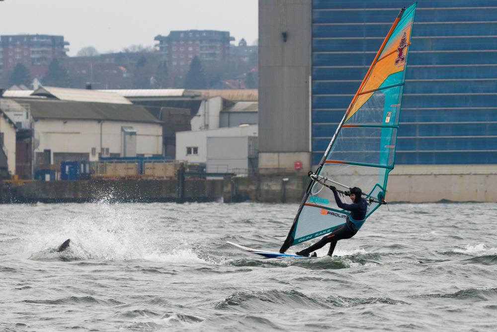 Delfin Springt in Flensburger Förde
