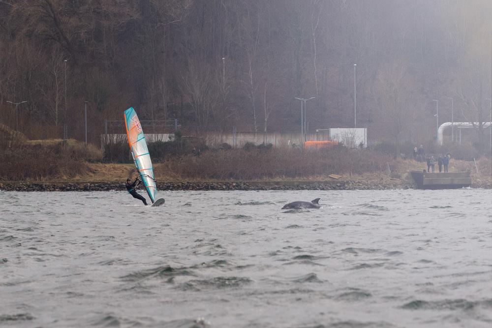 Hochzeitsfotograf Kiel fängt Delfine ein