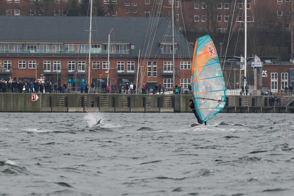 Delfine Flensburger Förde