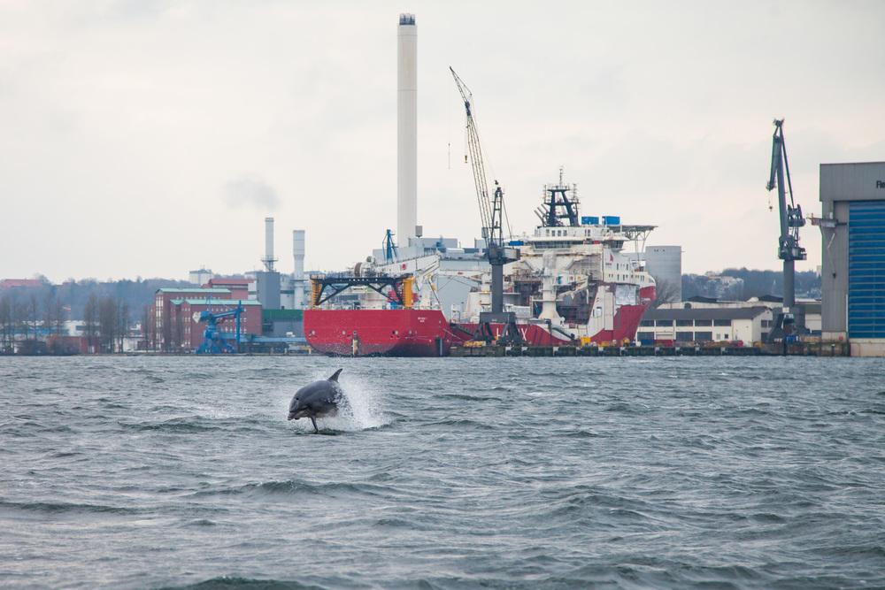 Delfine in der Flensburger F�rde