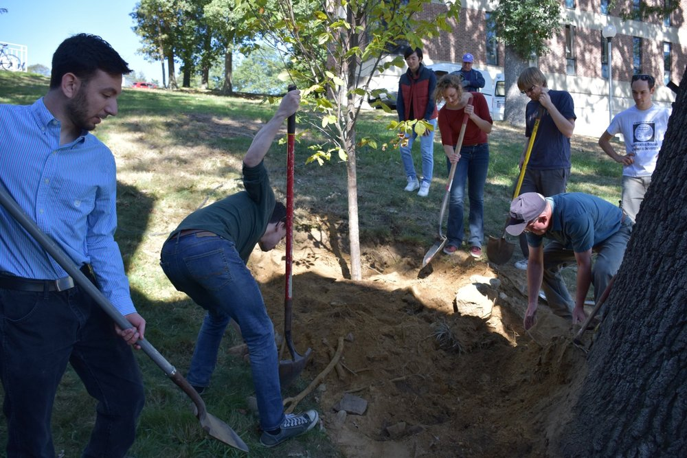 Rogers Lab - Brandeis University - Tree planting