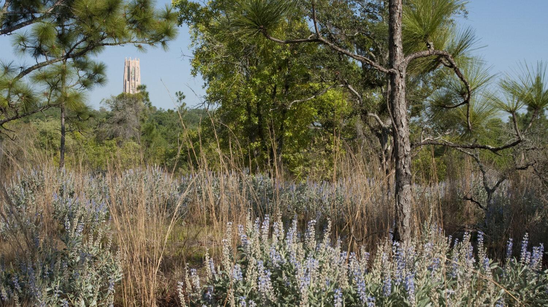 BOK Tower Gardens Master Plan — Studio Outside Landscape Architects