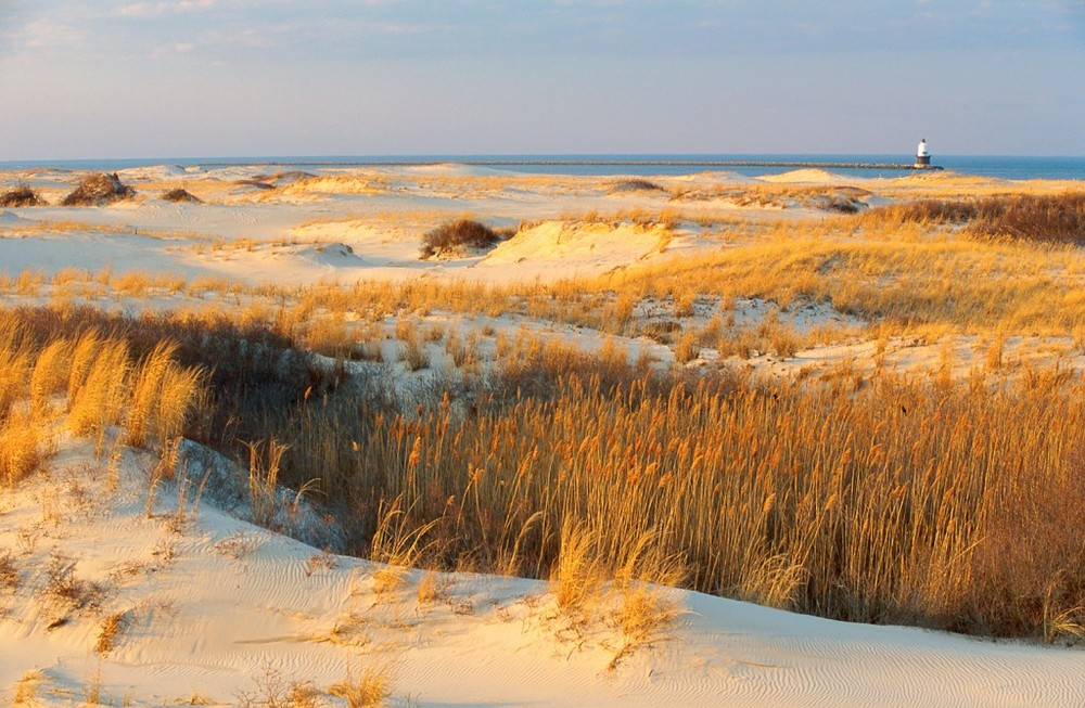 Dunes at Cape Henlopen State Park