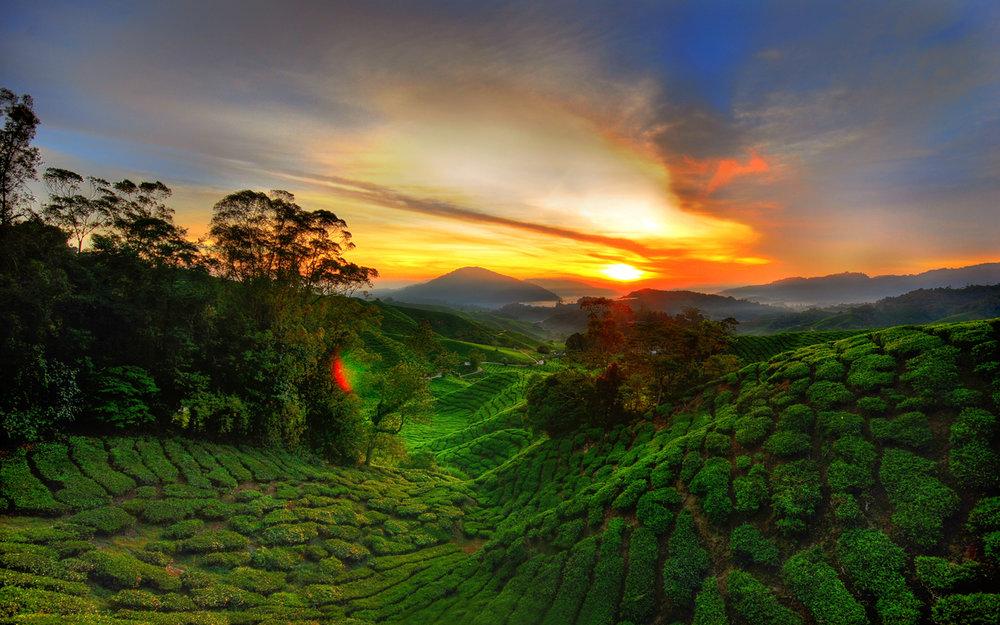 Cameroon-West-Africa-green-landscape-red-sky-sunset-Desktop-Wallpaper-full-screen.jpg