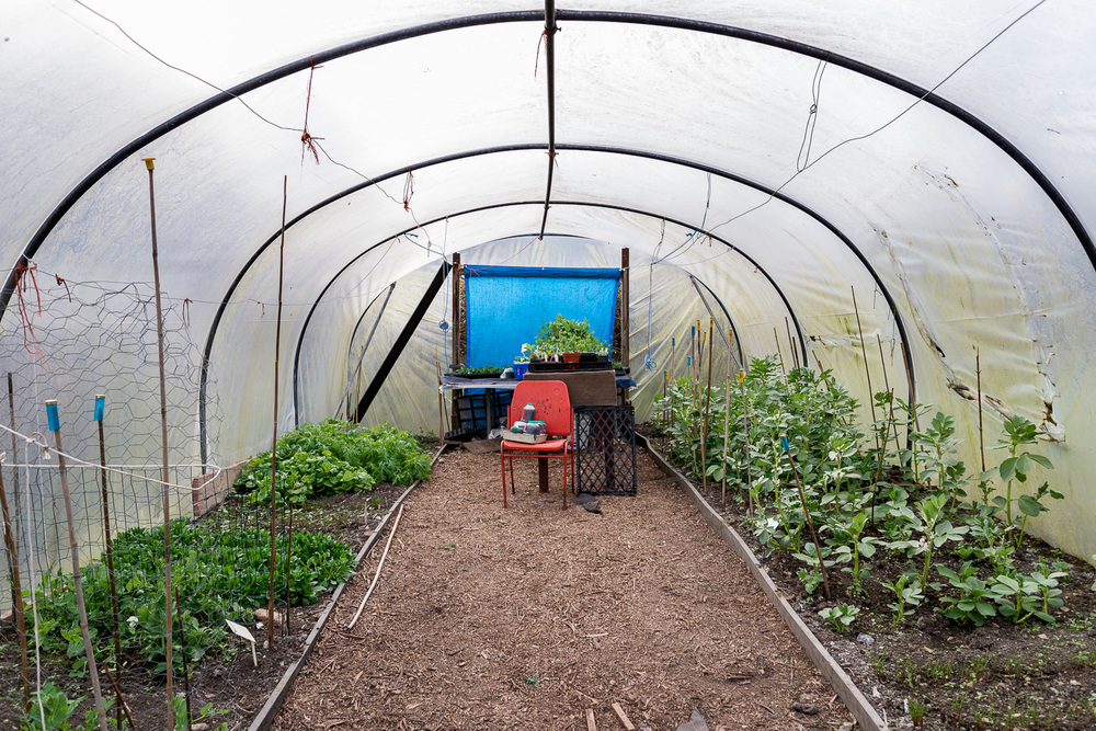 allotments-1.jpg