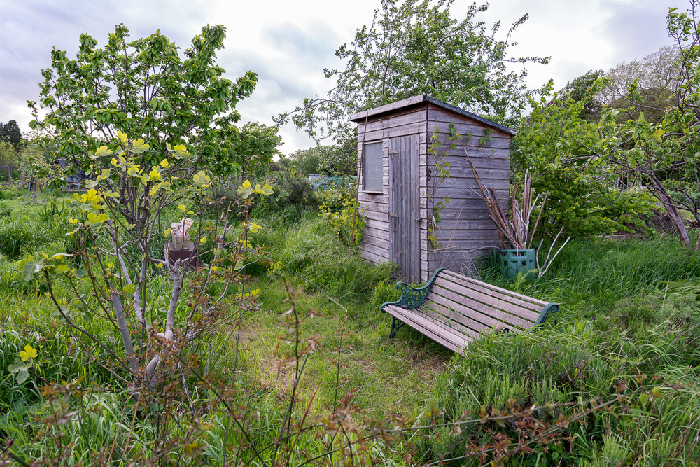 allotments-4.jpg