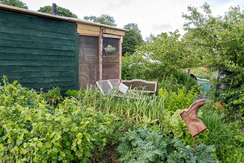 allotments-6.jpg