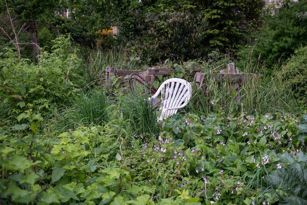 allotments-7.jpg