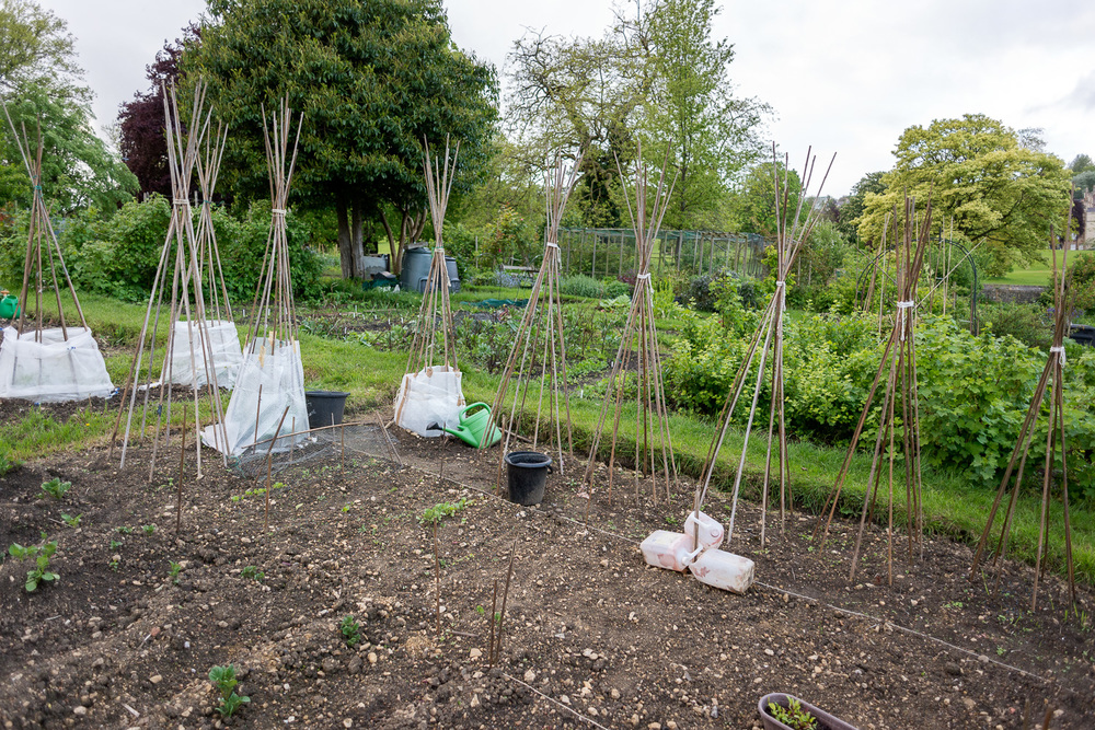 allotments-8.jpg