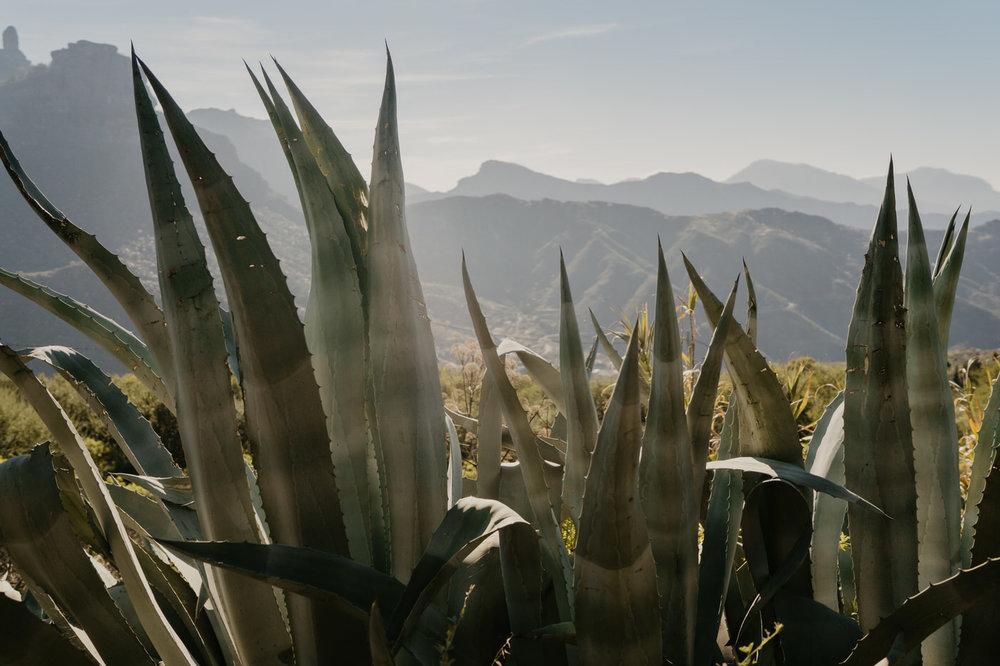 A&K Gran Canaria elopment0005.JPG