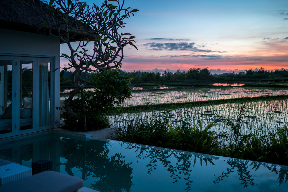Where to stay in Ubud | Never Settle Travel