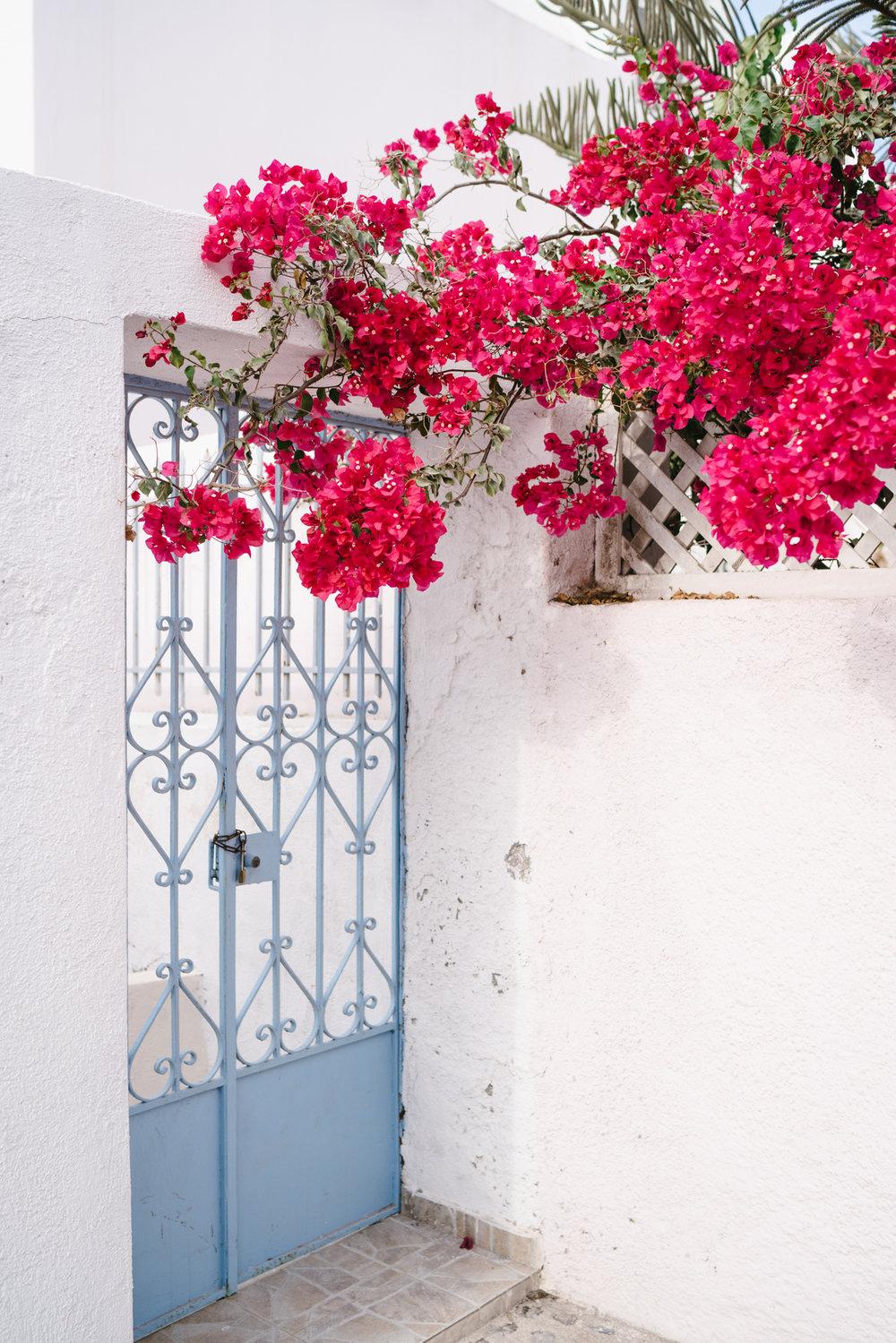 Beautiful bougainvillea around every corner in Greece