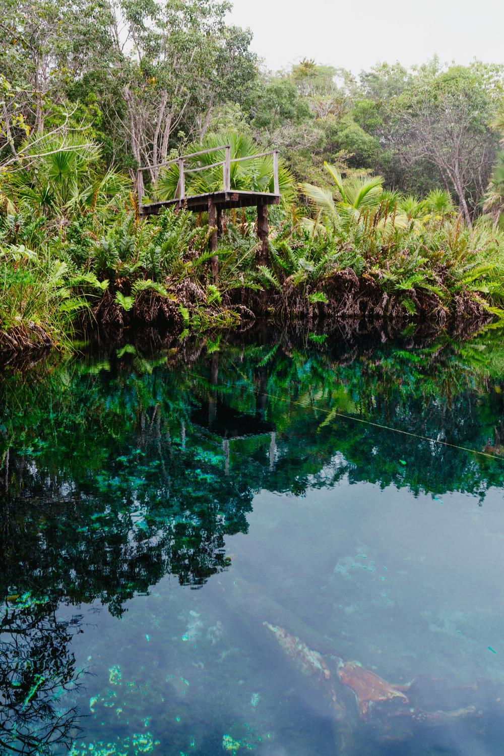 Cenote Cristal submerged tree