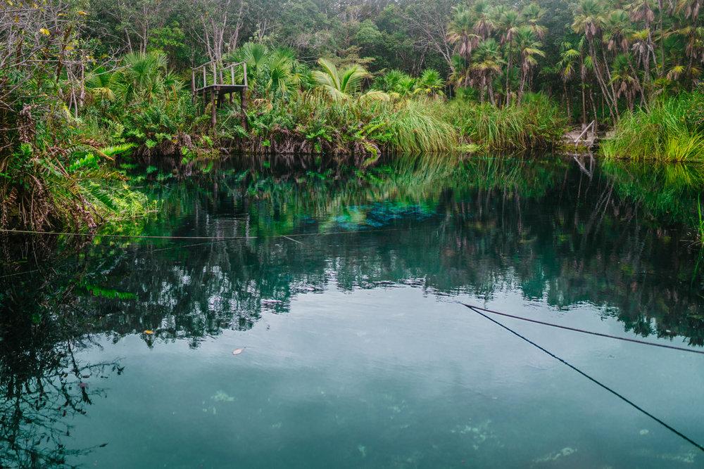 Cenote Cristal Tropical Oasis