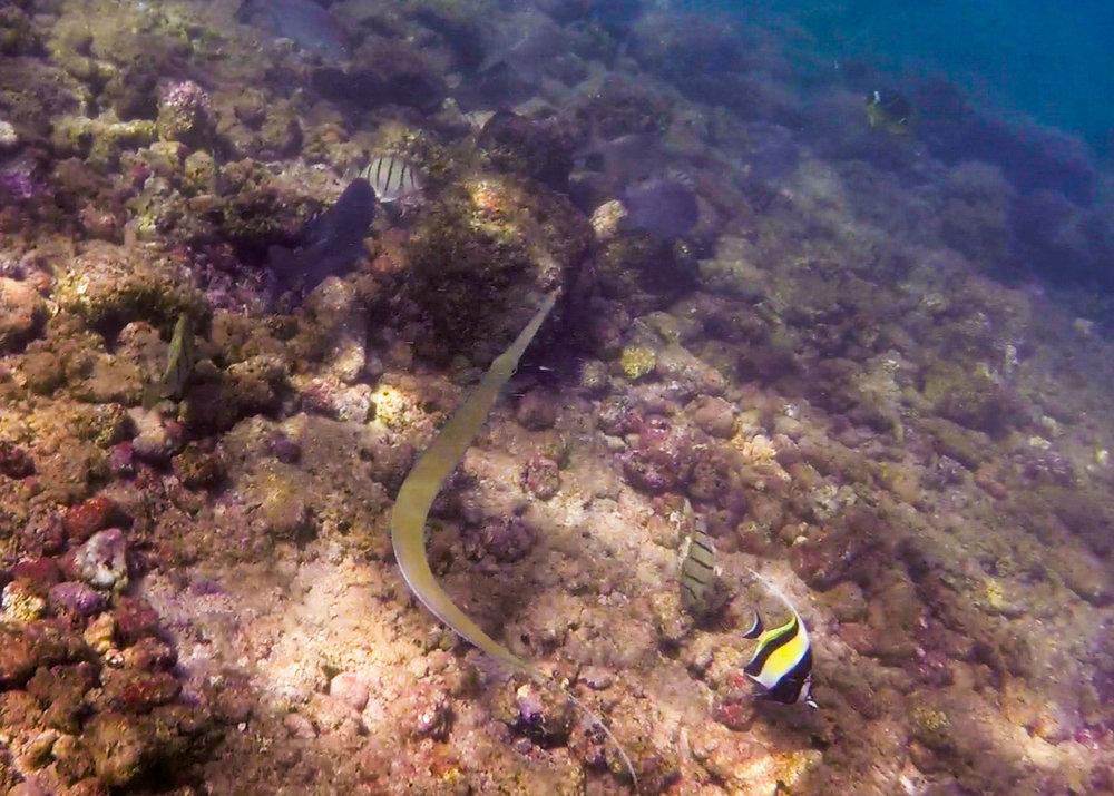 Snorkeling in Kauai | Never Settle Travel