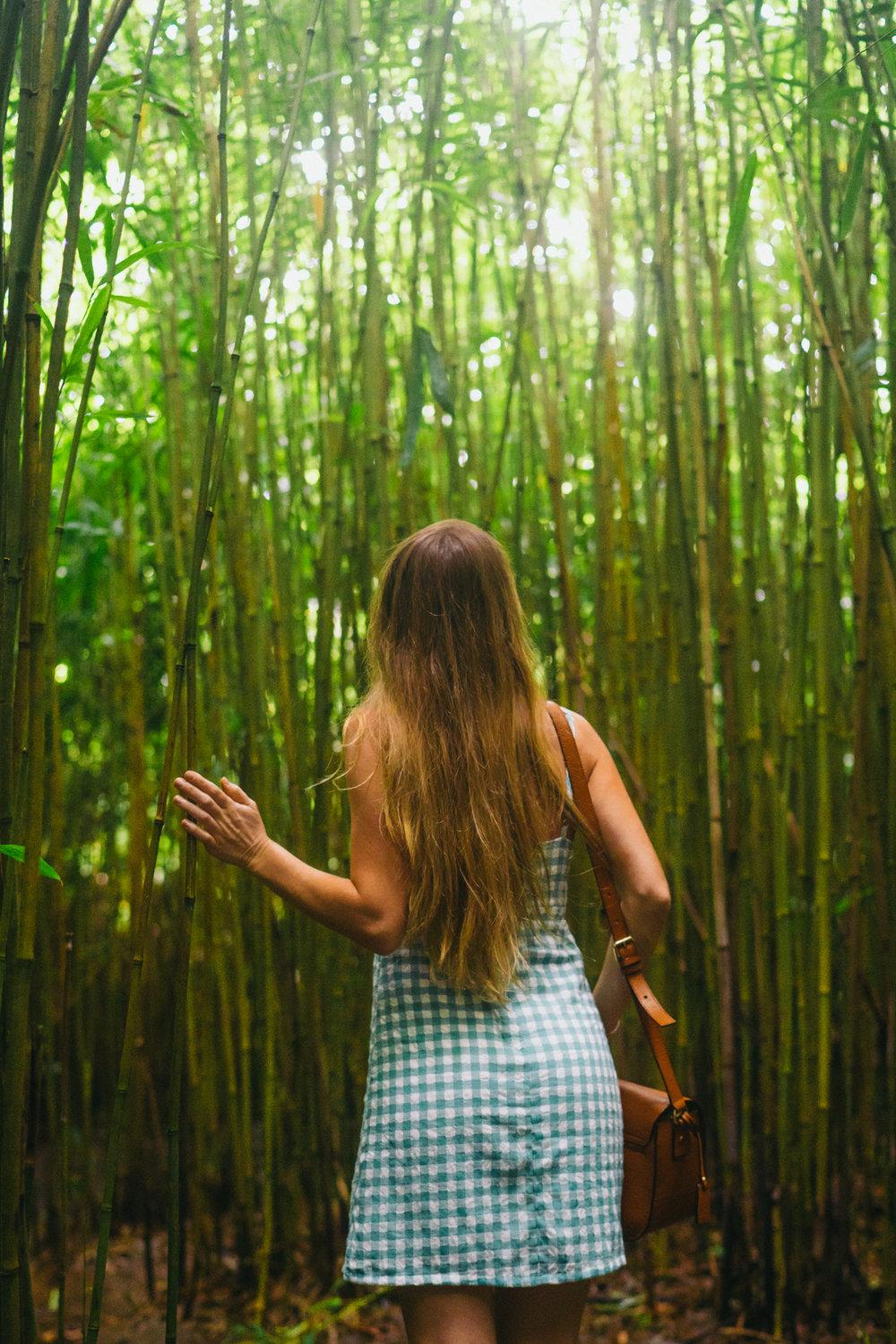 Bamboo Forest | Never Settle Travel