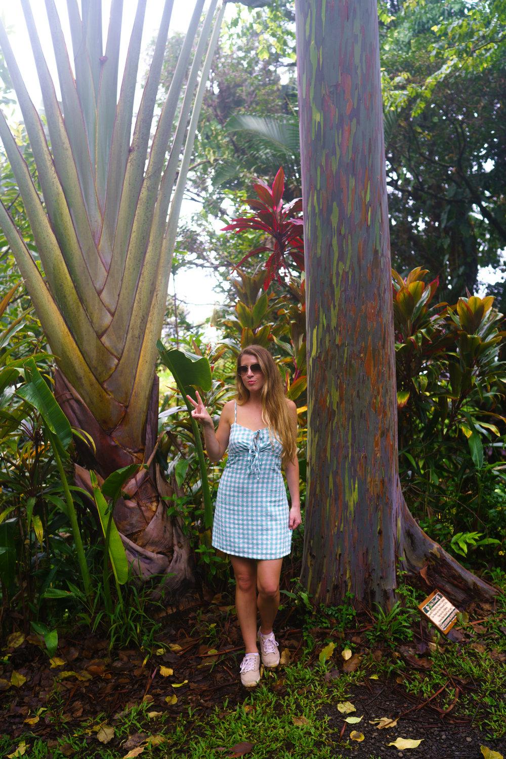 Rainbow Eucalyptus Tree in Maui | Never Settle Travel
