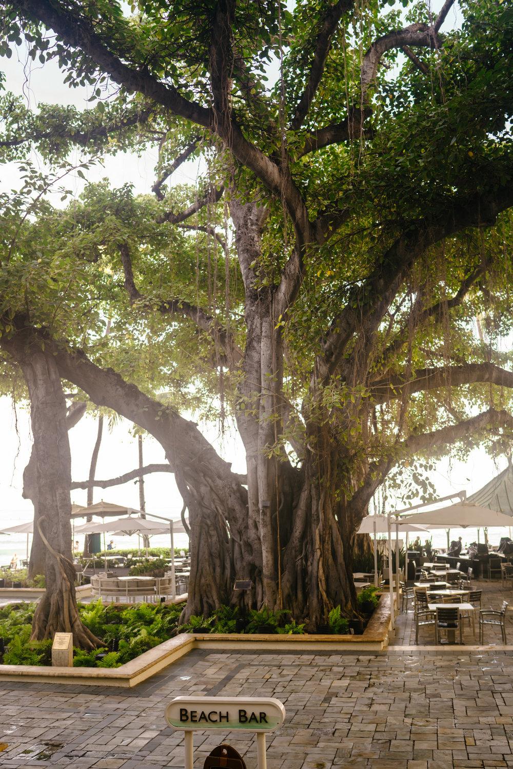 Where to eat in Honolulu