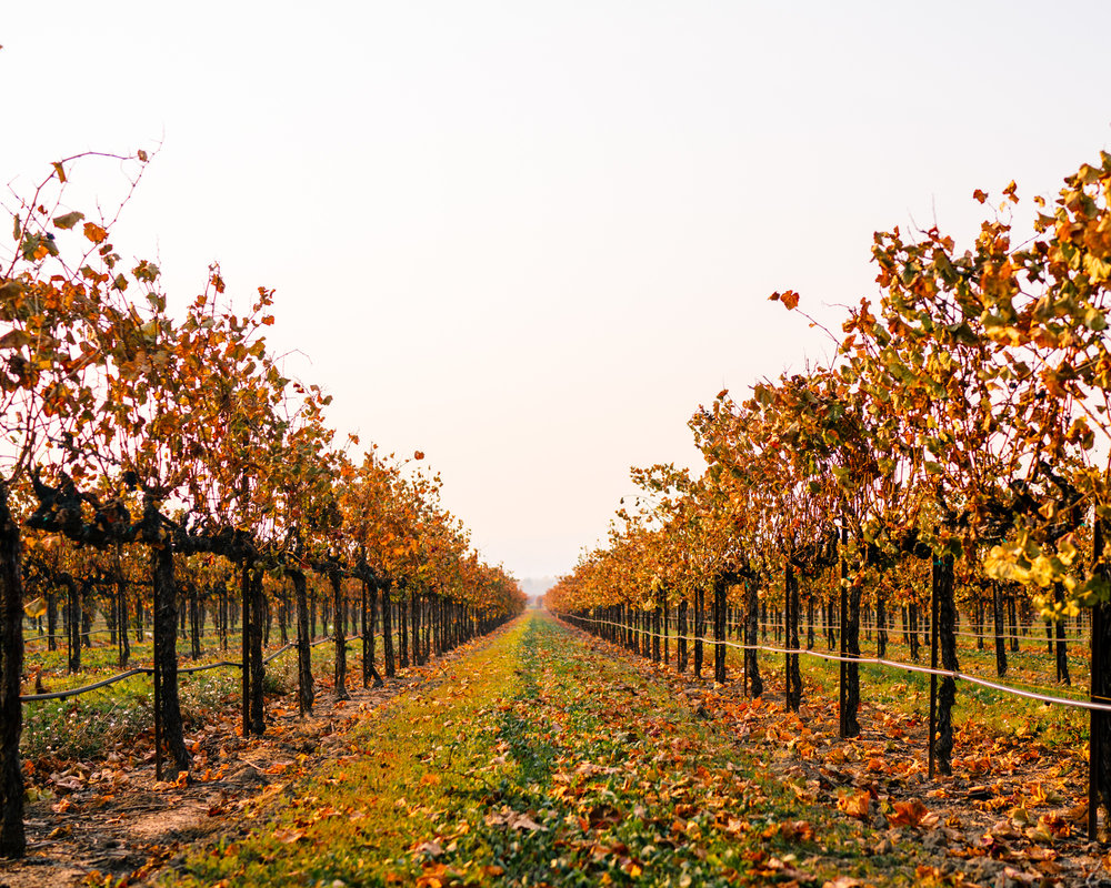 California Wine Country in the Fall
