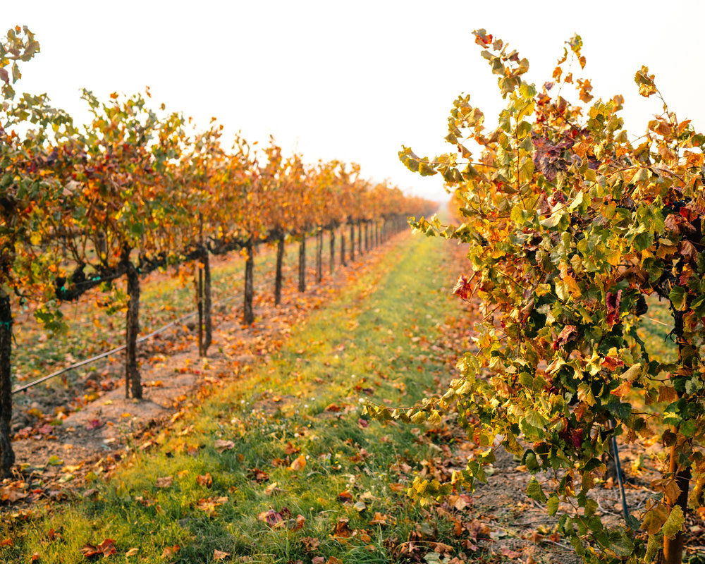 Fall Guide to Sonoma