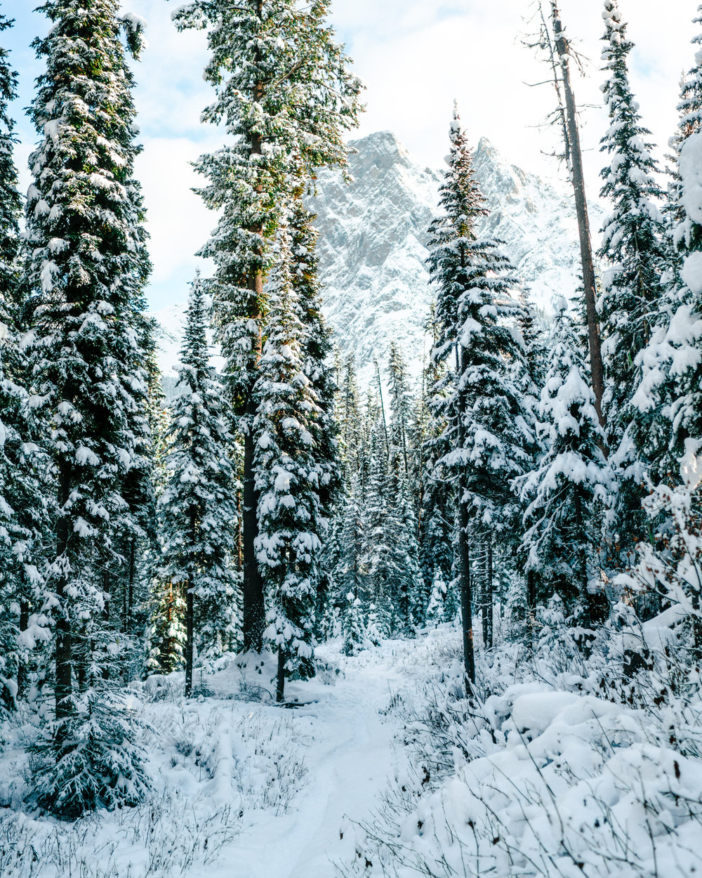 Winter in Banff National Park