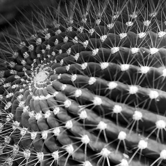 CactusStudy4.jpg