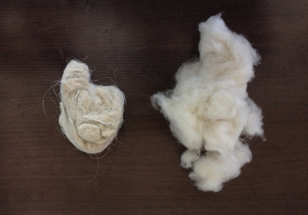 Raw and De-haired samples of the finest Pashmina Cashmere