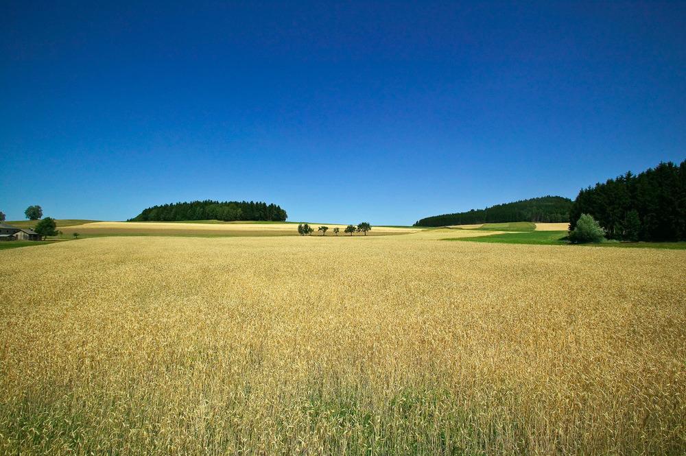 John_Stuart_Landscape1--9.jpg