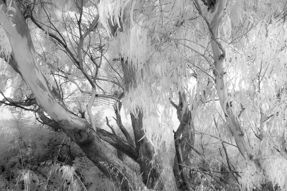 John_Stuart_Landscape1-0130.jpg