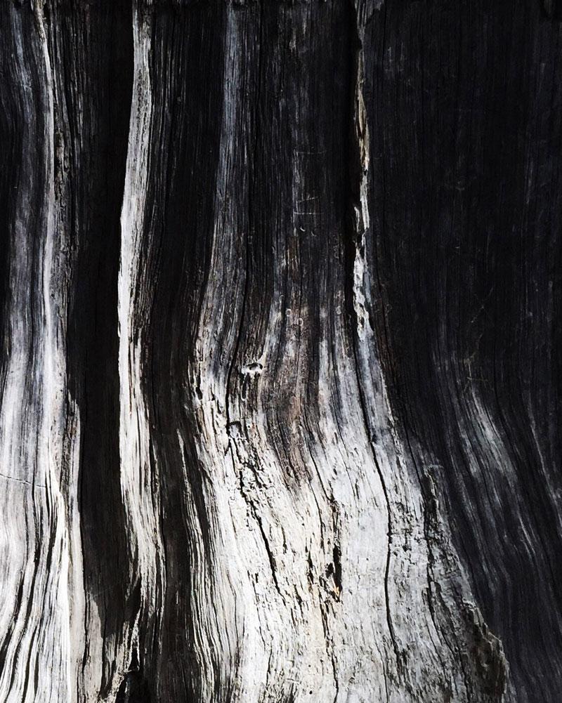 California-Redwood-National-Forest-Wood-Grain-Christy-Natsumi.jpg