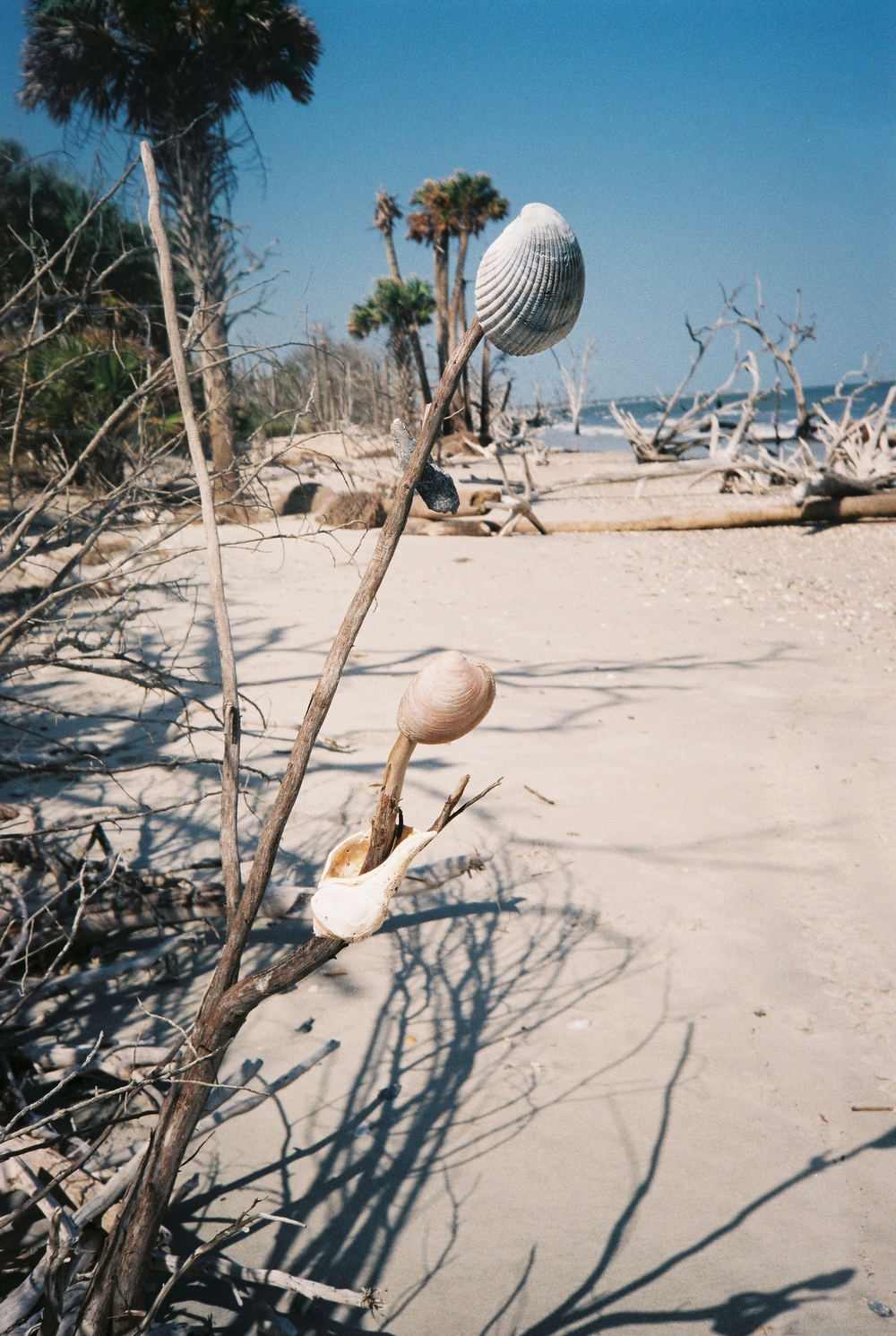 Botany bay was covered in shells.