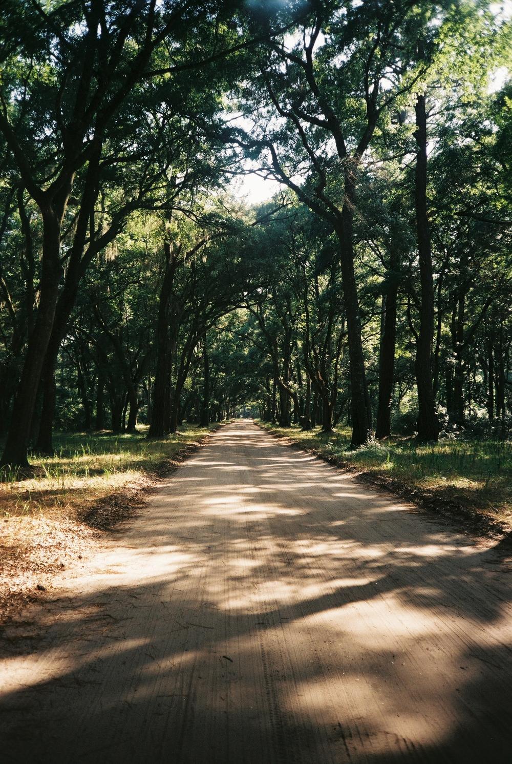 The drive on Edisto Island to Botany Bay.