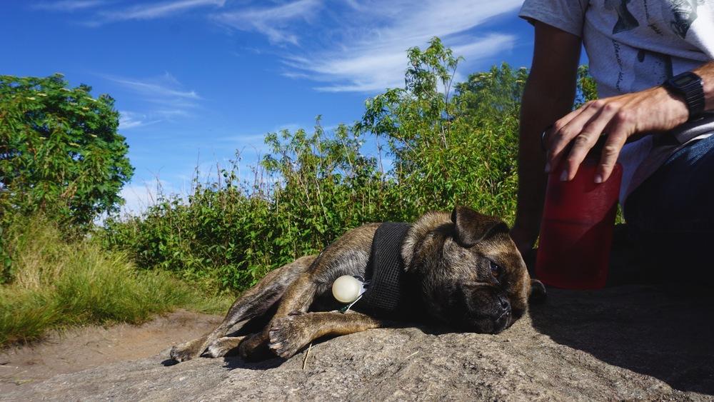 Sleepy from the hike.