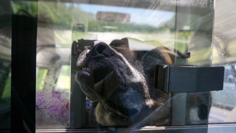 She was exhausted from our trip. She fell asleep against the window separating the camper top and the cab of the truck.