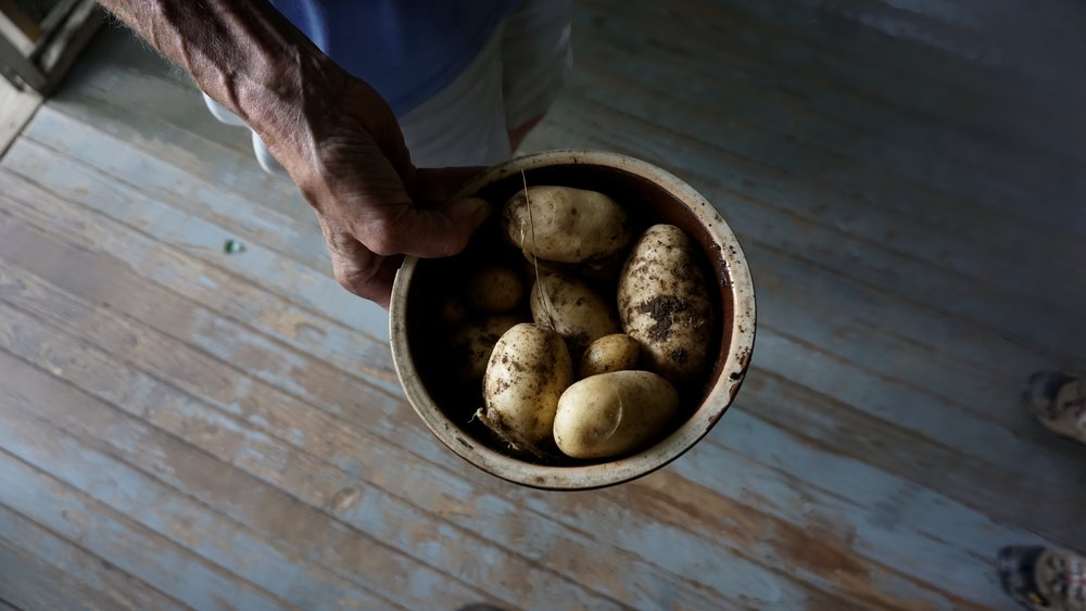 Potatoes from Jean's Garden