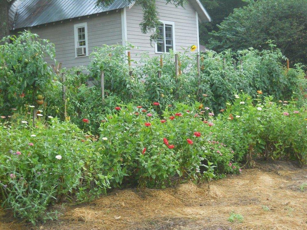Garden Aug 1 2012 008.jpg