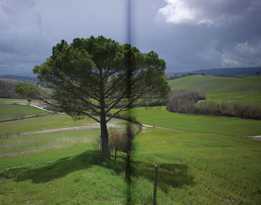 spier.nmw.trees.jpg