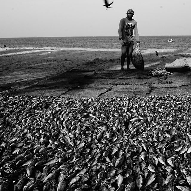A few months ago, I spent a day with the fishers of a town called #negombo in Sri Lanka. More of this series can be found at www.marvinamberg.com #throwback